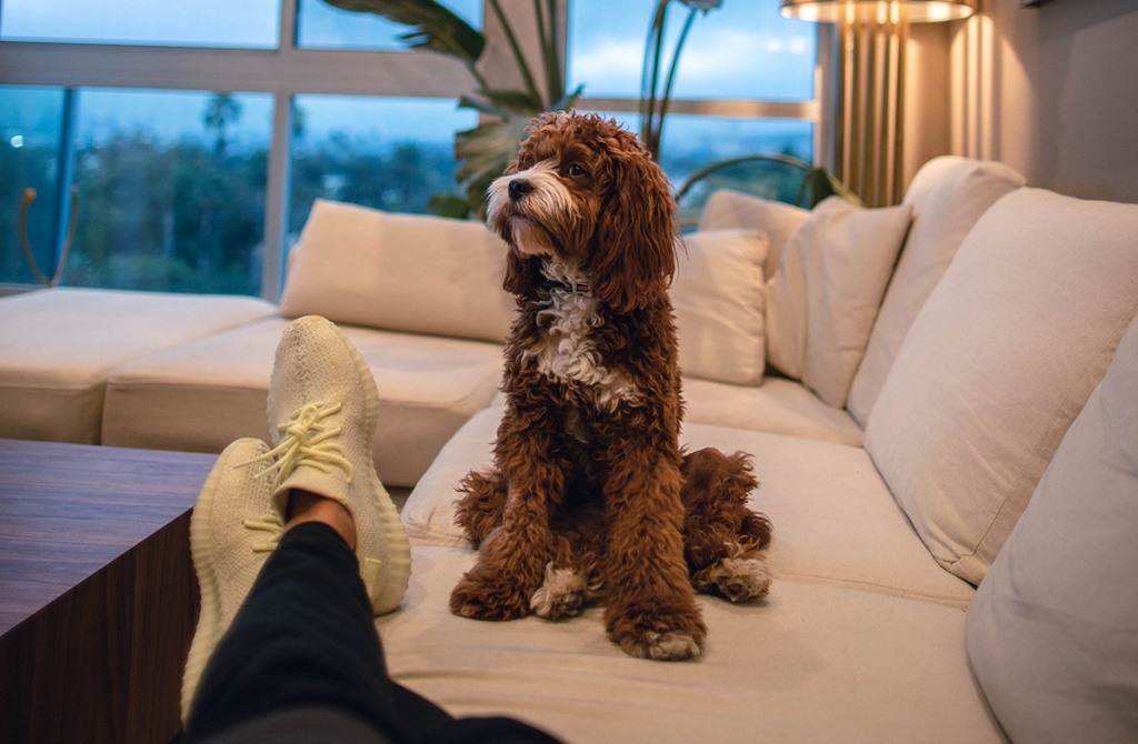 Dog on sofa in cool living room