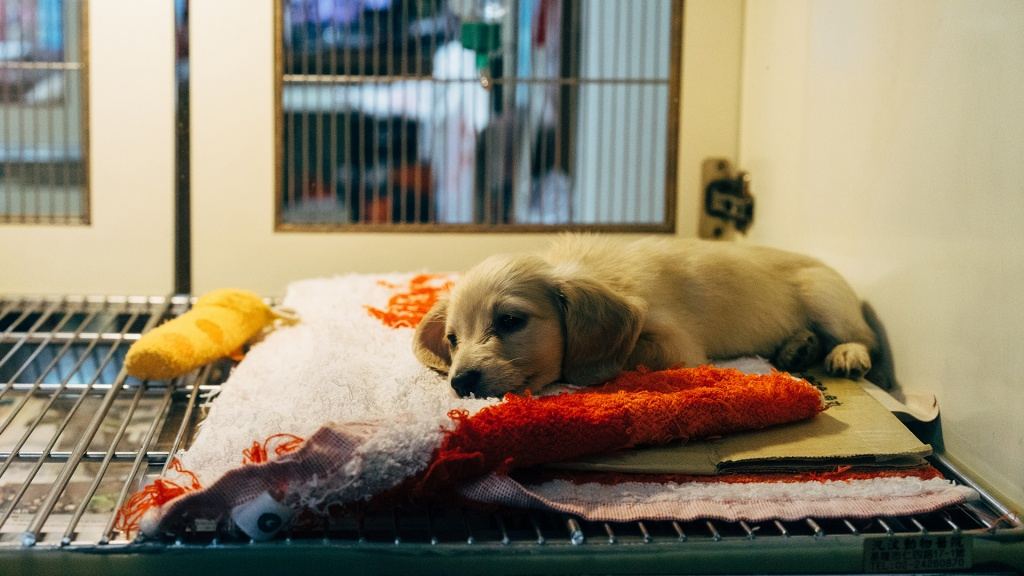 Puppy in animal shelter